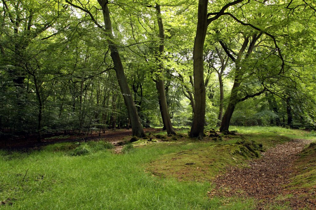 forêt-manifesto21