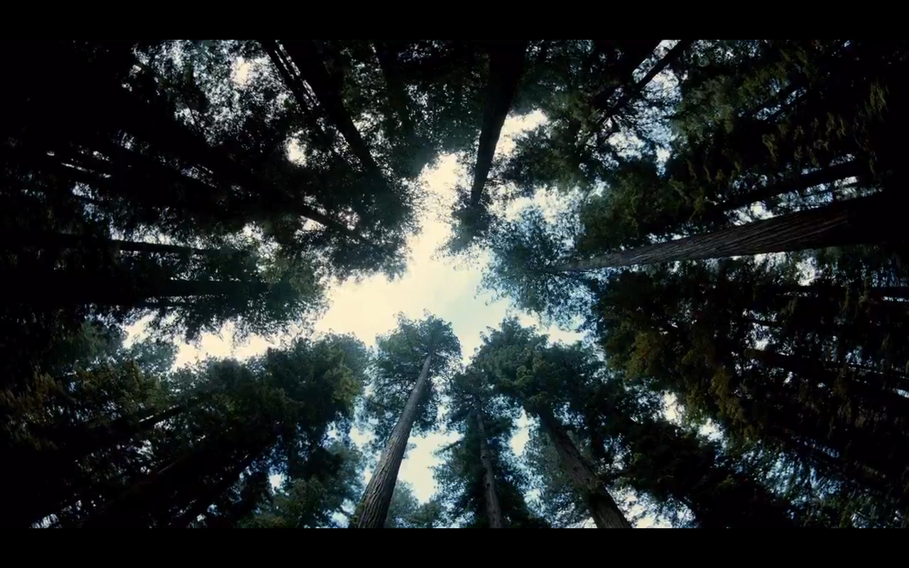 The Tree of Life Terrence Malick