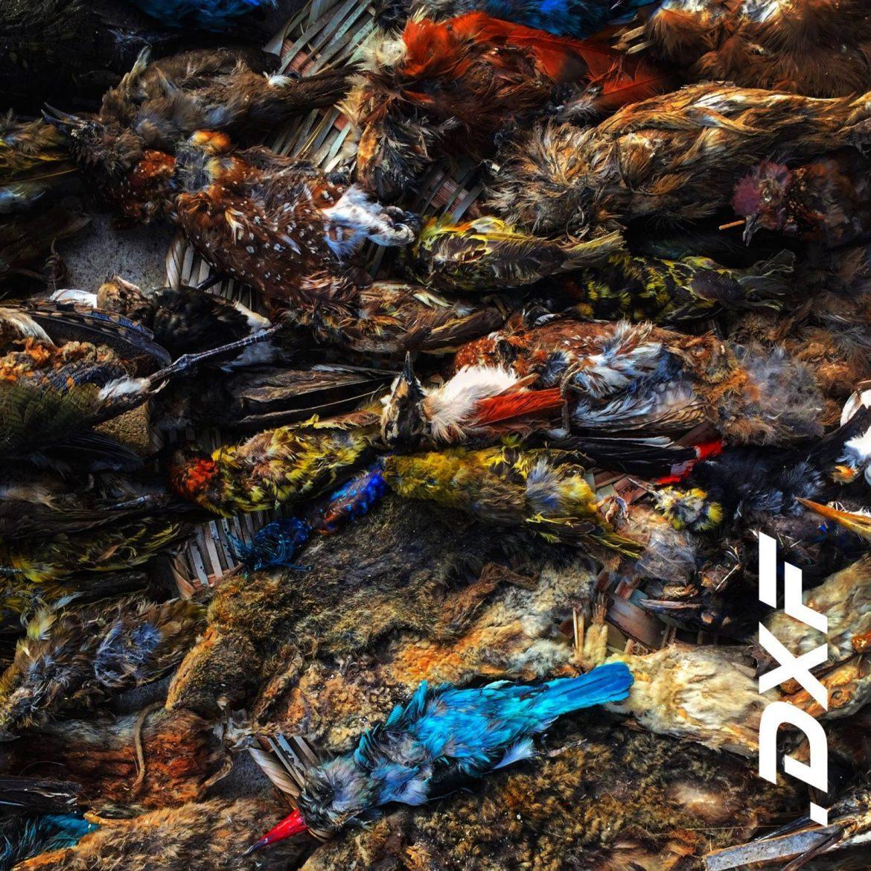 Le spleen magnifique du premier EP de  dxf - Manifesto XXI